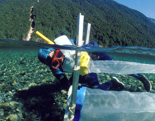 A snorkeler  underwater taking samples using a net.