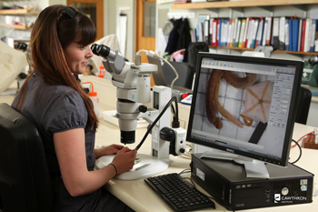 A female scientist examines specimens under a microscope. She is looking at a computer monitor which is displaying the view from the microscope. The specimens appear to be a type of worm and a starfish.